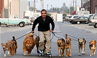 Cesar Millan on roller skates with a group of dogs