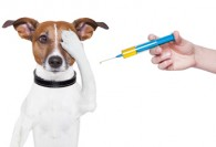 don't over-vaccinate your dog!