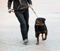 Is hiring a dog walker a good idea?
