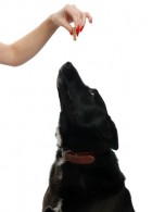post_eeding_dog_treat_283x392