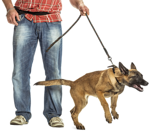lunging dog on a leash