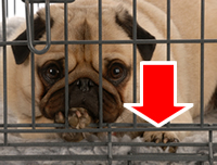 wire dog crate with arrow pointing to bottom