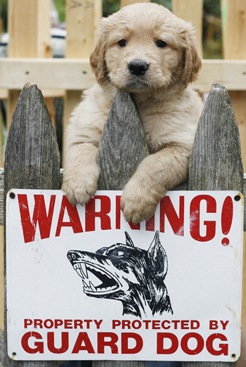 guard dog sign and a puppy on a fence - we should protect our dogs our dogs should not protect us