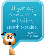 If your dog is fat, you aren't getting enough exercise.