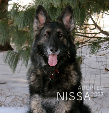 German Shepherd Nissa adopted April 2007