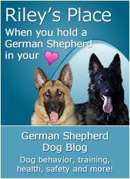 A German Shepherd Dog Blog for those who love German Shepherds and the Shepherds who love us!
