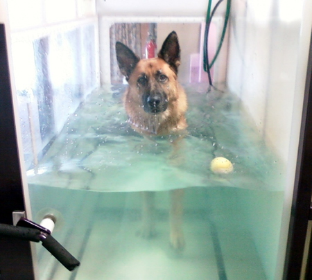 Aqua Paws hydrotherapy for dogs