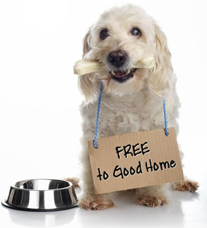 "white dog wearing ""FREE to Good Home"" sign"