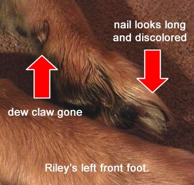 Riley's left front foot
